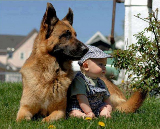 Фото показывающие, как домашние любимцы становятся лучшими друзьями с маленькими детками