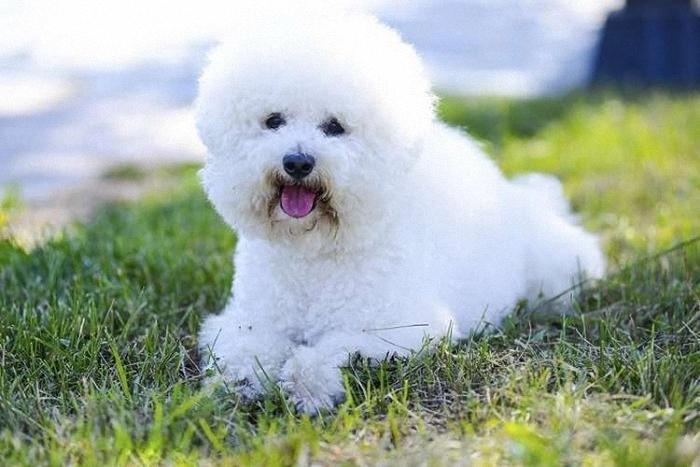 10 самых милых и добрых собак в мире